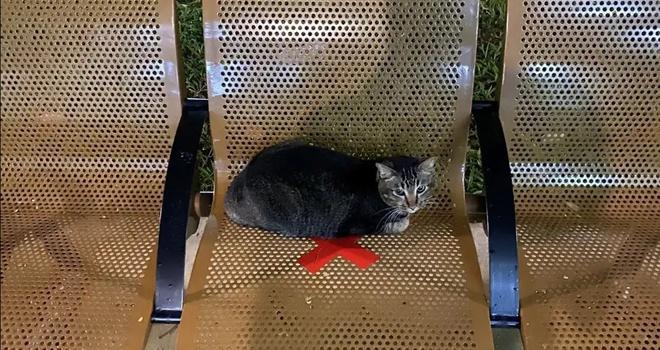 Lũ mèo nằm dài trên bàn ghế công cộng bị niêm phong vì dịch Ảnh 1