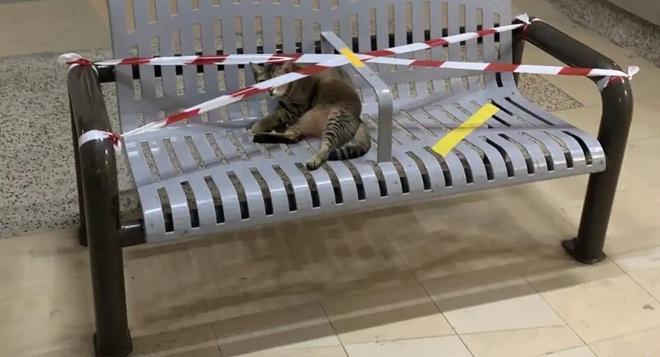Lũ mèo nằm dài trên bàn ghế công cộng bị niêm phong vì dịch Ảnh 2