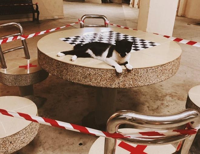 Lũ mèo nằm dài trên bàn ghế công cộng bị niêm phong vì dịch Ảnh 3