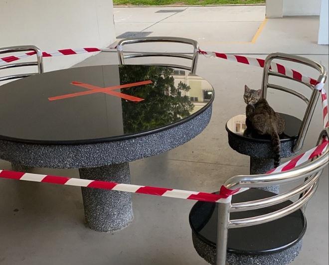 Lũ mèo nằm dài trên bàn ghế công cộng bị niêm phong vì dịch Ảnh 5