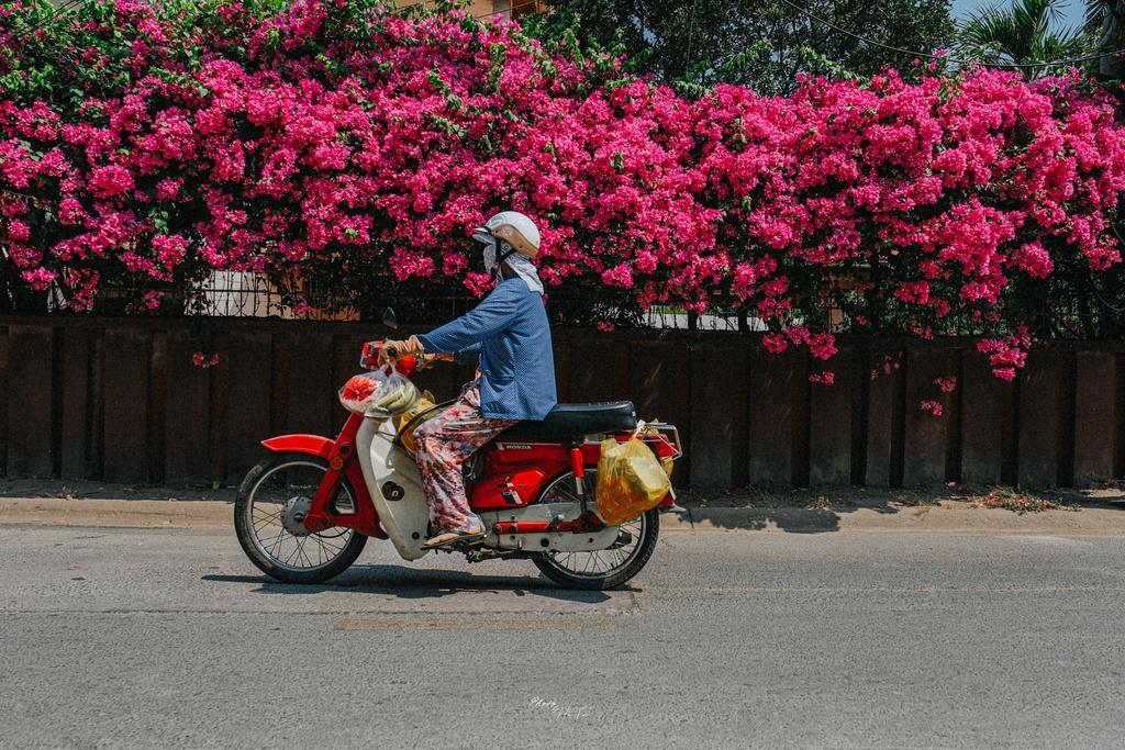Hoa giấy khoe sắc trên góc phố Sài thành Ảnh 2