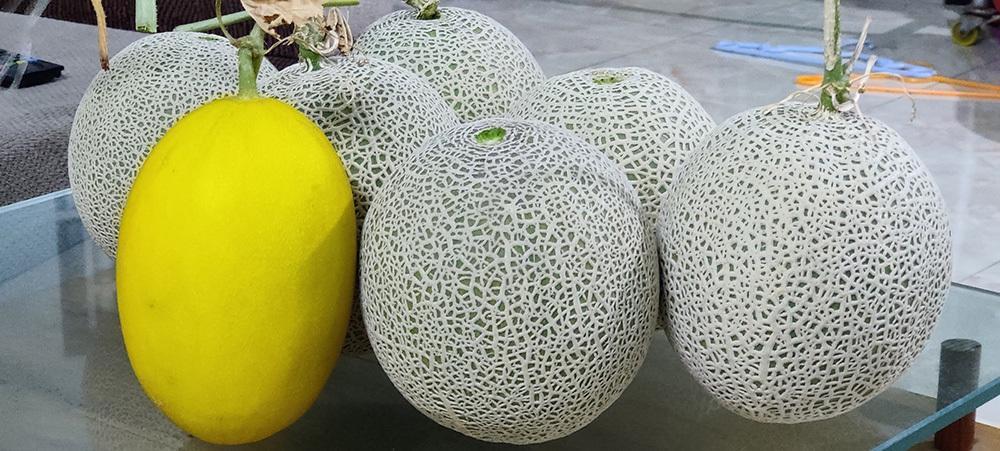 Ông chủ Đồng Nai trồng rau thả cá trên sân thượng, vợ 3 năm không cần đi chợ Ảnh 5