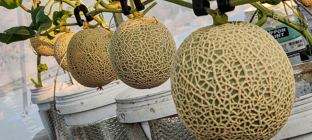 Ông chủ Đồng Nai trồng rau thả cá trên sân thượng, vợ 3 năm không cần đi chợ Ảnh 11