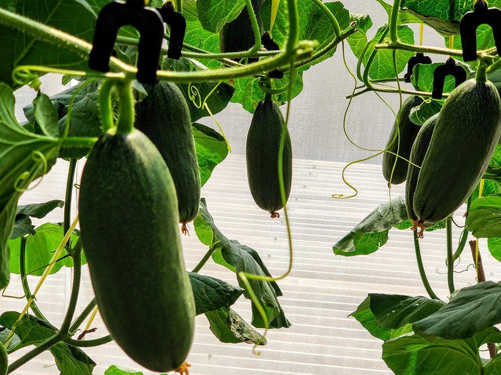 Ông chủ Đồng Nai trồng rau thả cá trên sân thượng, vợ 3 năm không cần đi chợ Ảnh 13