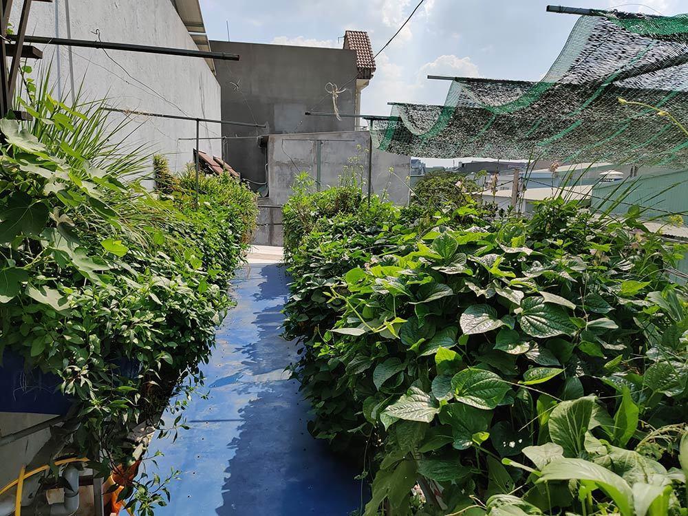 Ông chủ Đồng Nai trồng rau thả cá trên sân thượng, vợ 3 năm không cần đi chợ Ảnh 1