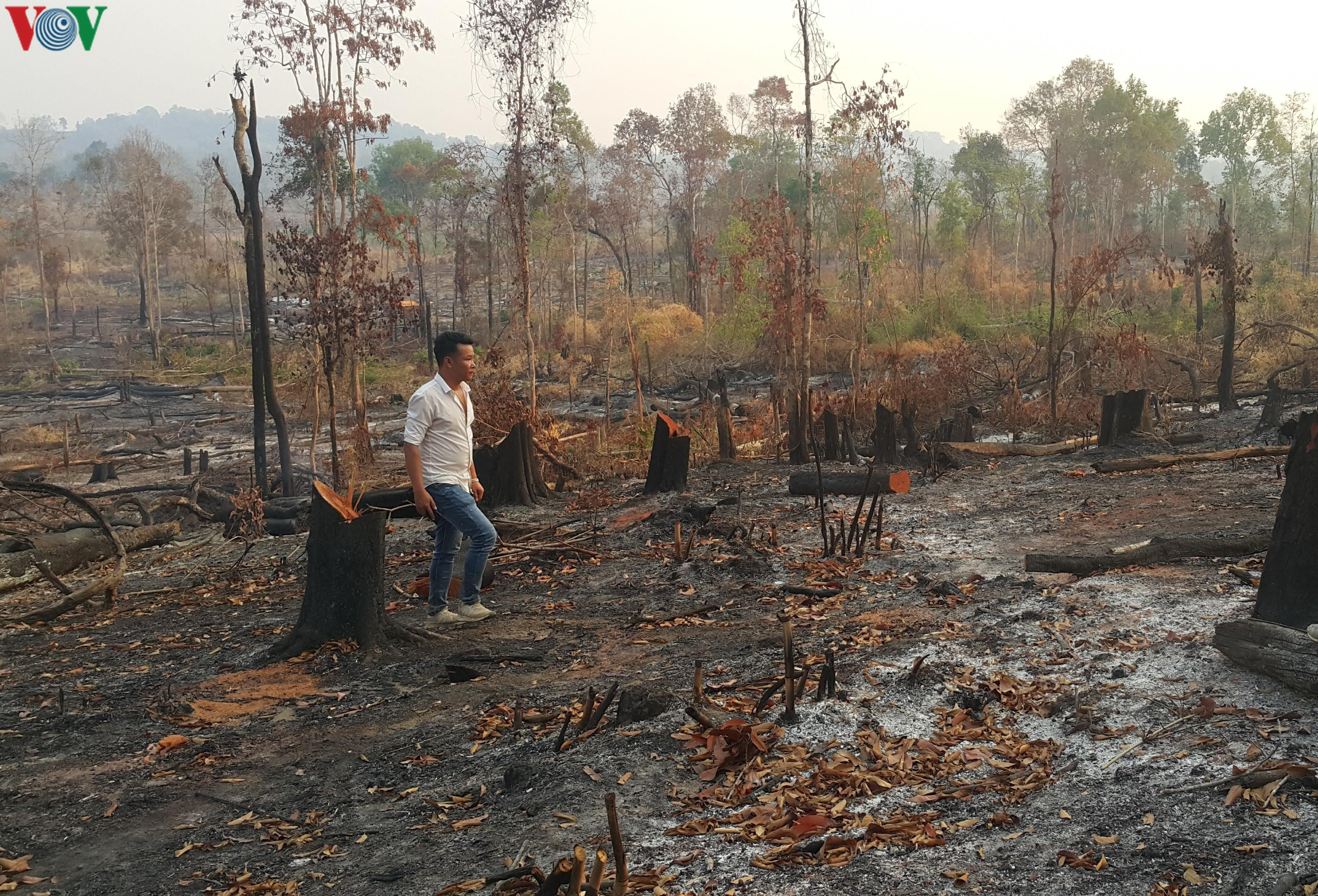 Tây Nguyên mất rừng, vỡ quy hoạch, quản lý yếu kém, hạn chồng hạn Ảnh 1