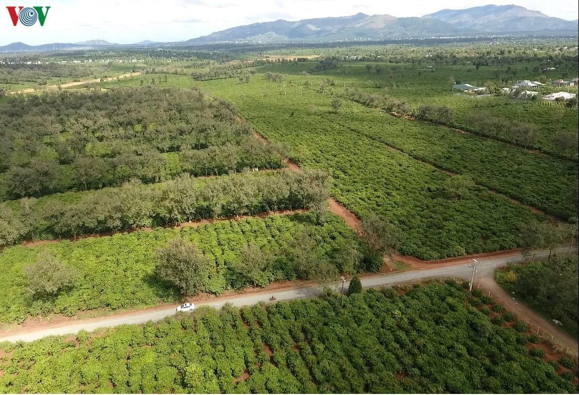 Tây Nguyên mất rừng, vỡ quy hoạch, quản lý yếu kém, hạn chồng hạn Ảnh 3