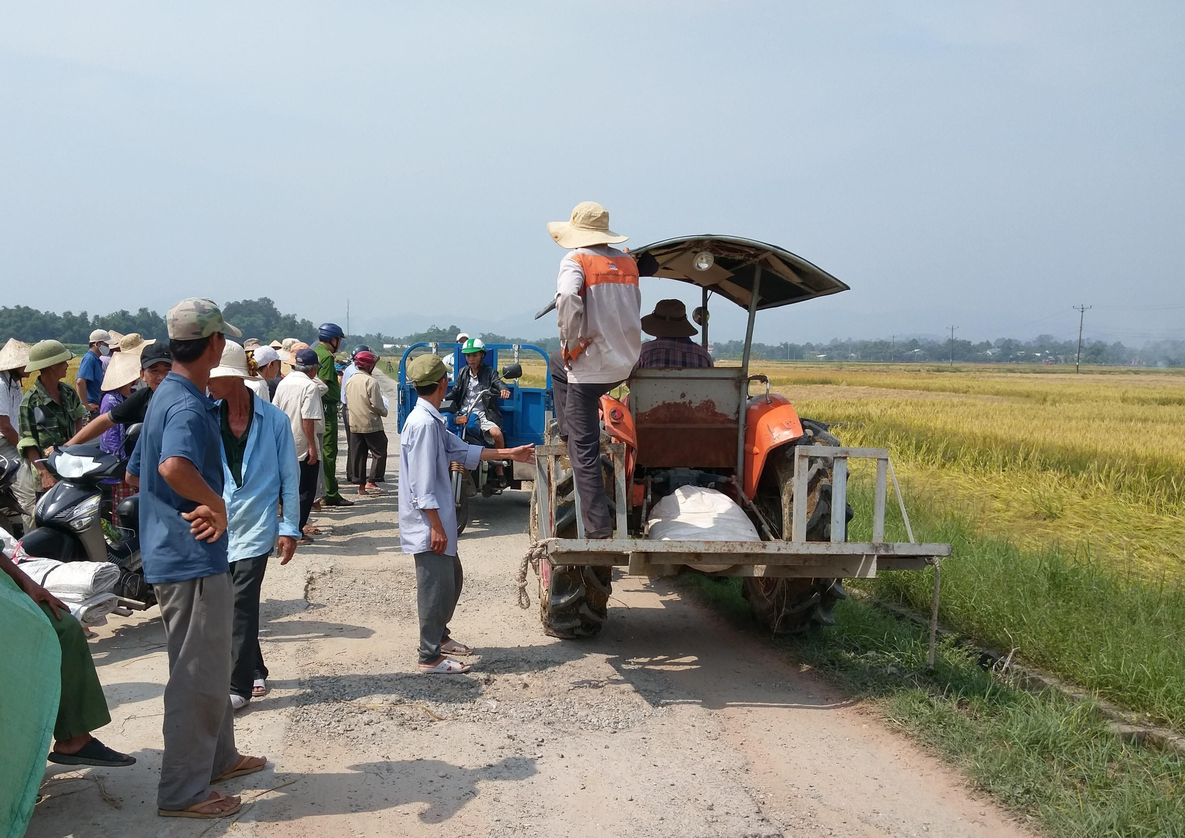Kỳ lạ chuyện ở Huế, lúa chín rục không được thu hoạch do độc quyền máy gặt?