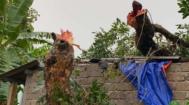 Sét đánh chết một phụ nữ trên đồng, lốc xoáy đổ cây Ảnh 1
