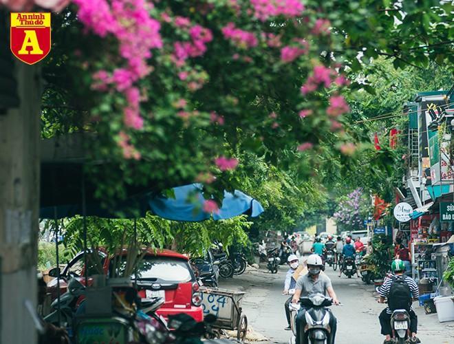 Hoa giấy bung nở khoe sắc ở Hà Nội Ảnh 17