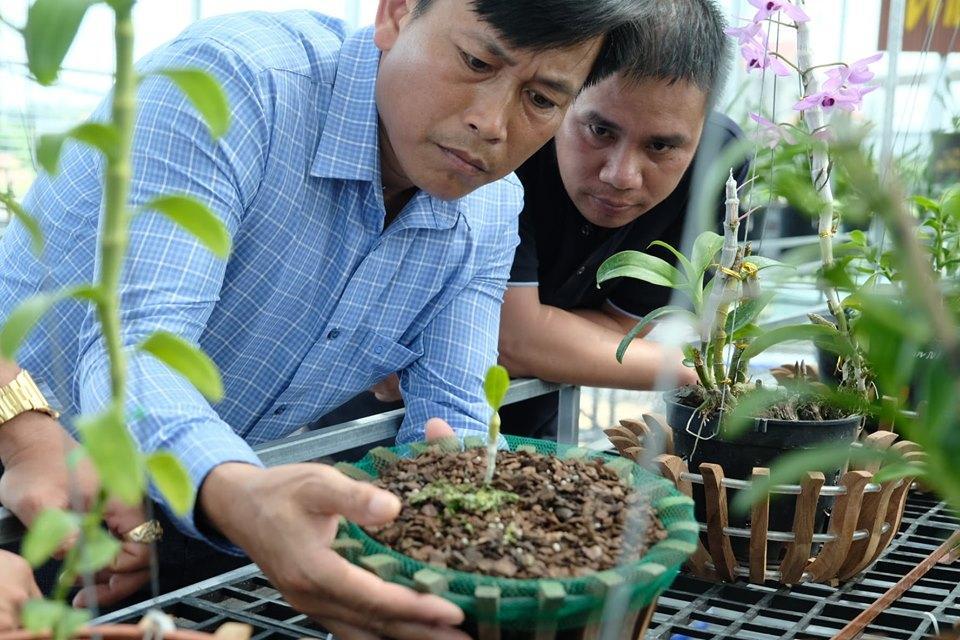 Ngắm vườn hoa lan đột biến, giá trị gần 10 tỷ đồng tại vùng hoa Mê Linh Ảnh 3