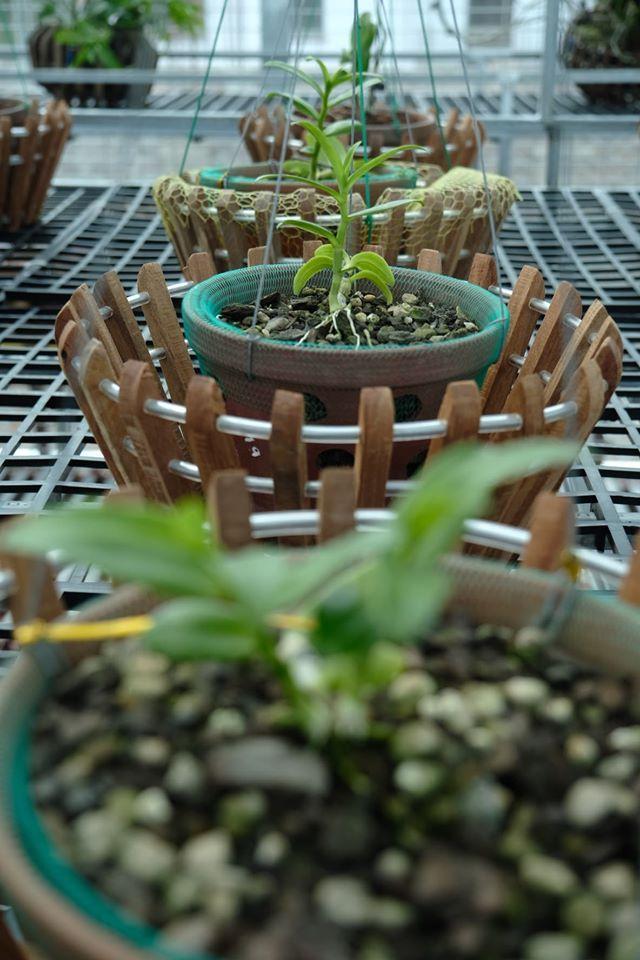 Ngắm vườn hoa lan đột biến, giá trị gần 10 tỷ đồng tại vùng hoa Mê Linh Ảnh 5