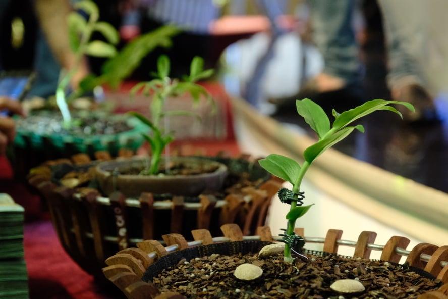 Ngắm vườn hoa lan đột biến, giá trị gần 10 tỷ đồng tại vùng hoa Mê Linh Ảnh 1