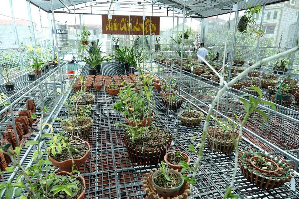 Ngắm vườn hoa lan đột biến, giá trị gần 10 tỷ đồng tại vùng hoa Mê Linh Ảnh 8