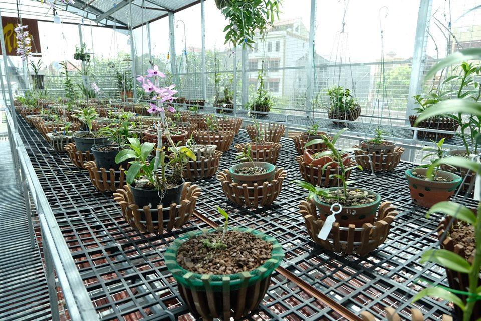 Ngắm vườn hoa lan đột biến, giá trị gần 10 tỷ đồng tại vùng hoa Mê Linh Ảnh 4