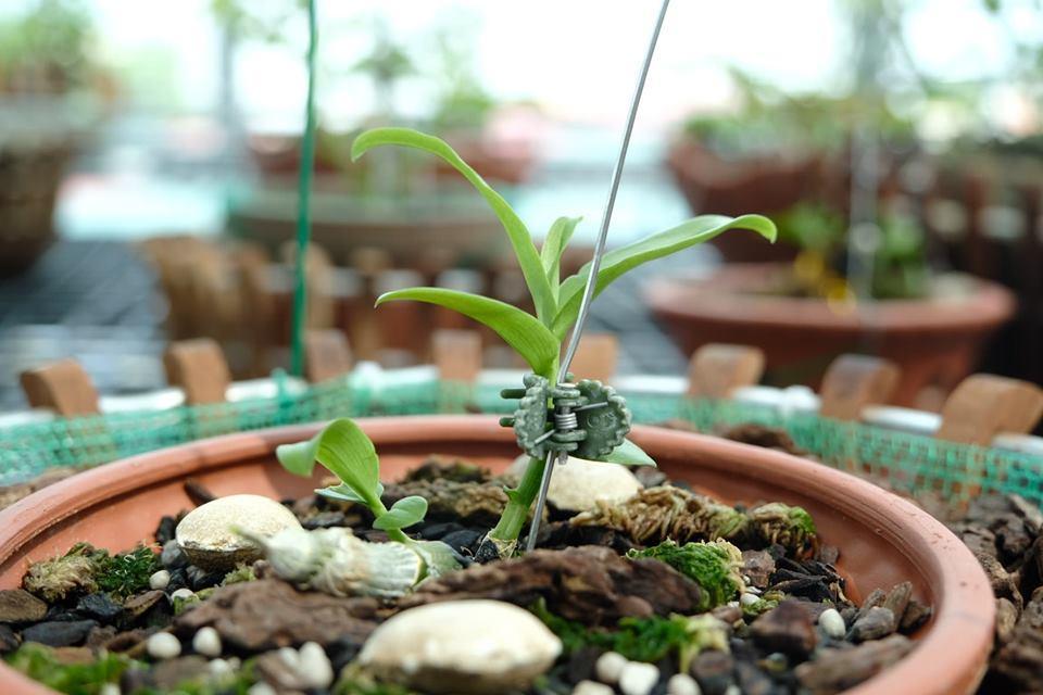 Ngắm vườn hoa lan đột biến, giá trị gần 10 tỷ đồng tại vùng hoa Mê Linh Ảnh 9