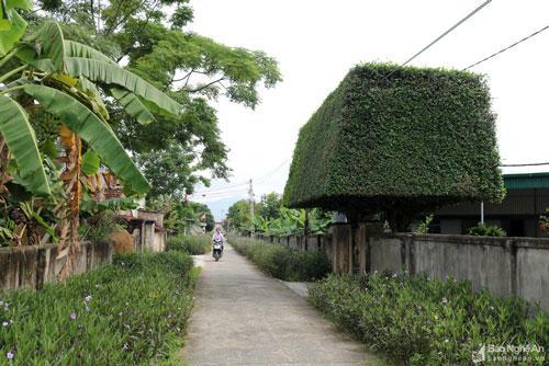 Độc đáo cổng nhà làm từ 2 cây duối cổ thụ ở Nghệ An Ảnh 1