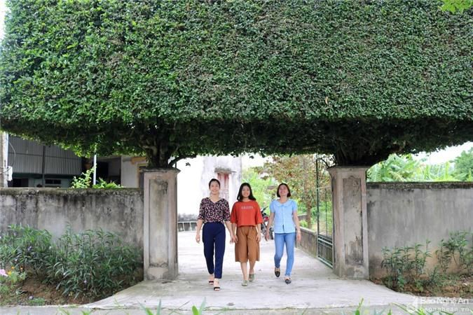 Độc đáo cổng nhà làm từ 2 cây duối cổ thụ ở Nghệ An Ảnh 2