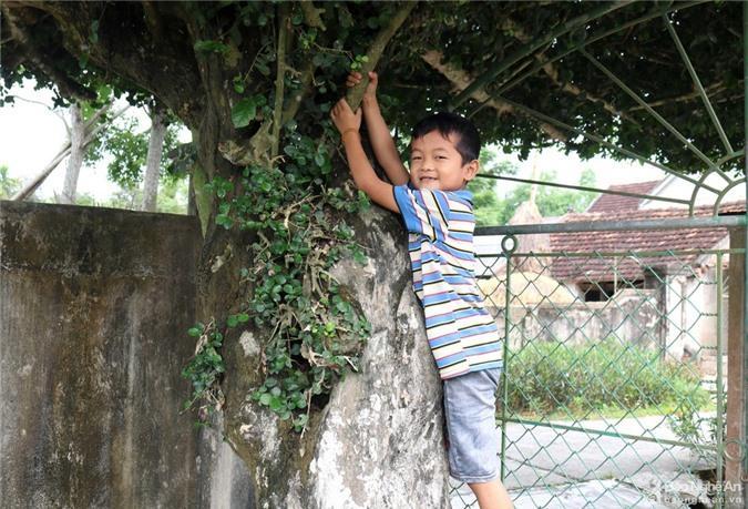 Độc đáo cổng nhà làm từ 2 cây duối cổ thụ ở Nghệ An Ảnh 5