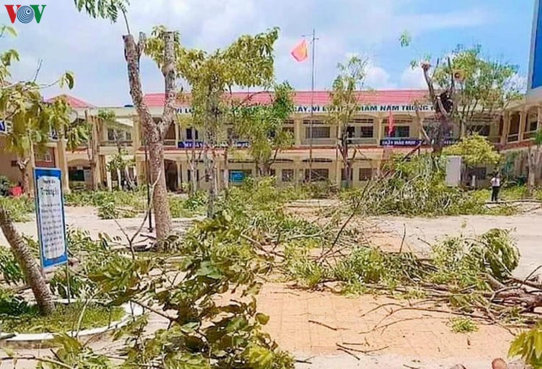 Đốn hạ hàng loạt cây phượng, phụ huynh lo ngại mảng xanh trong trường Ảnh 3