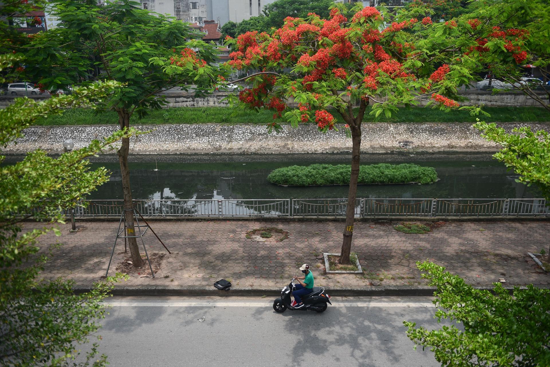 Hà Nội nơi đỏ rực rỡ nhờ hoa phượng, chỗ dát vàng bởi muồng hoàng yến Ảnh 10