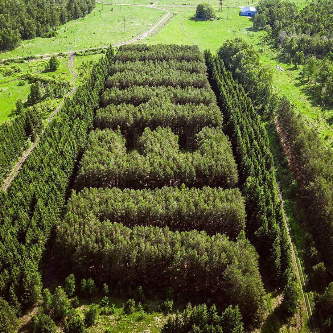 Rừng thông tạo hình tên lãnh tụ Lenin đẹp nên thơ qua lăng kính nhiếp ảnh gia Nga Ảnh 4