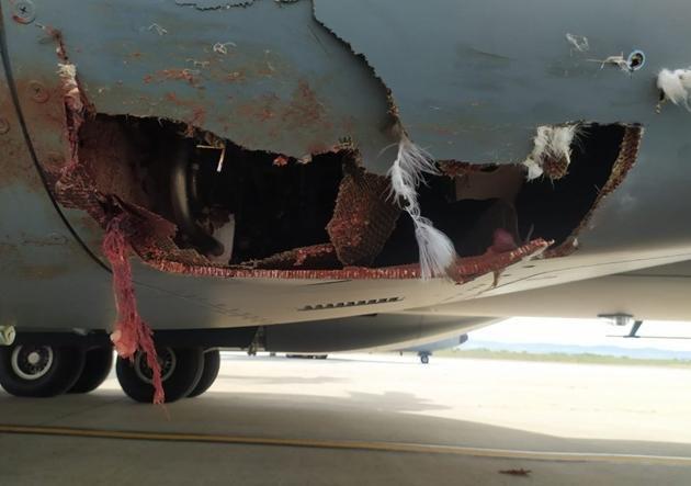 Máy bay vận tải quân sự tầm xa của Anh và Tây Ban Nha vỡ toác sau va chạm với... chim Ảnh 4