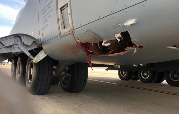 Máy bay vận tải quân sự tầm xa của Anh và Tây Ban Nha vỡ toác sau va chạm với... chim Ảnh 3
