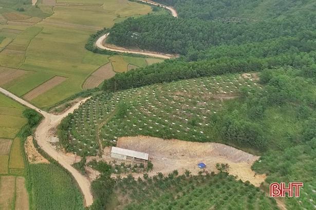 Xã miền núi Hà Tĩnh có hàng trăm 'triệu phú' nhờ xóa vườn tạp, khai phá đồi hoang Ảnh 4