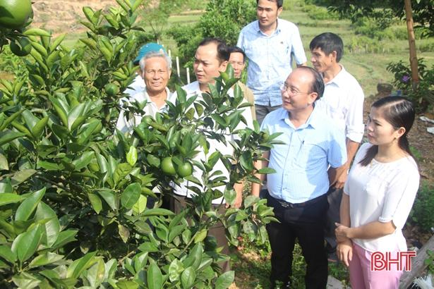 Xã miền núi Hà Tĩnh có hàng trăm 'triệu phú' nhờ xóa vườn tạp, khai phá đồi hoang Ảnh 3
