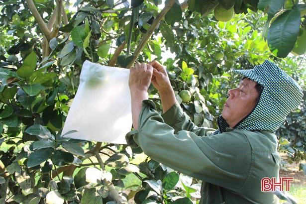 Xã miền núi Hà Tĩnh có hàng trăm 'triệu phú' nhờ xóa vườn tạp, khai phá đồi hoang Ảnh 1