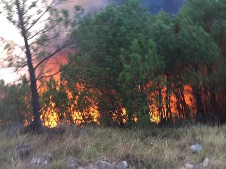 Cả nghìn người dập lửa đám cháy rừng lan qua nhiều xã ở Nghệ An Ảnh 2