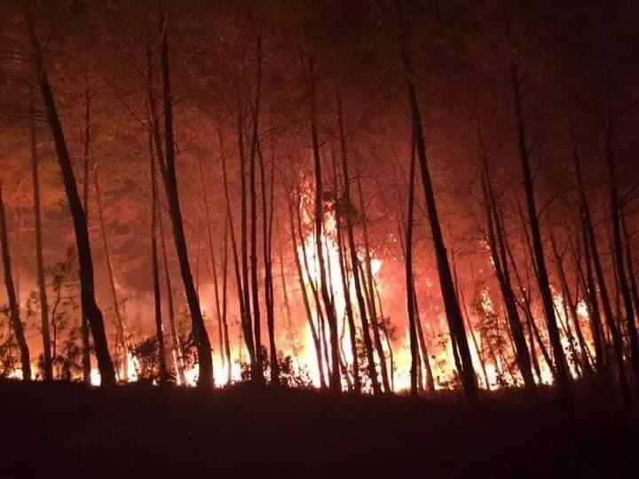 Cả nghìn người dập lửa đám cháy rừng lan qua nhiều xã ở Nghệ An Ảnh 5
