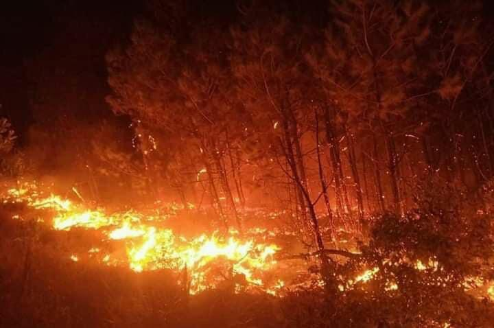 Cả nghìn người dập lửa đám cháy rừng lan qua nhiều xã ở Nghệ An Ảnh 4