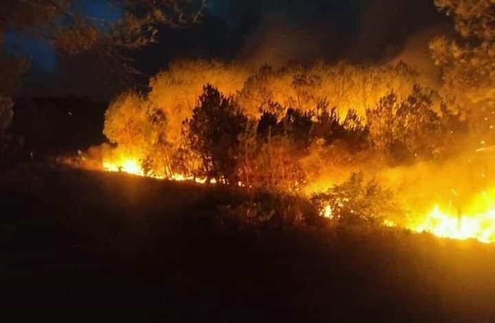 Cả nghìn người dập lửa đám cháy rừng lan qua nhiều xã ở Nghệ An Ảnh 6