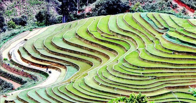 Ruộng bậc thang - bức tranh nghệ thuật nơi vùng núi Sơn La Ảnh 1