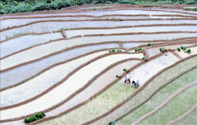 Ruộng bậc thang - bức tranh nghệ thuật nơi vùng núi Sơn La Ảnh 8
