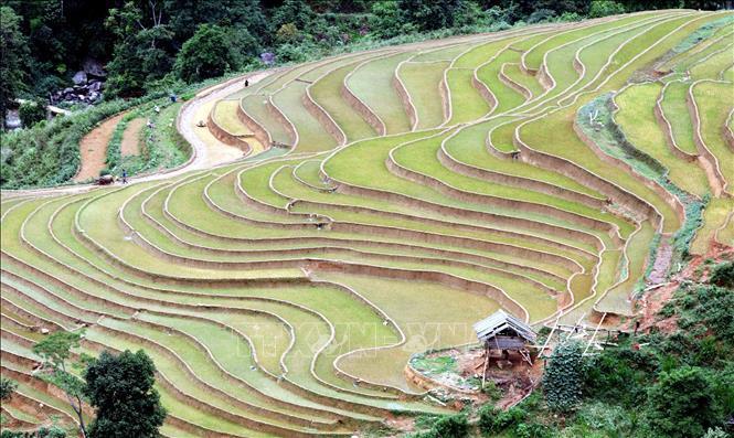 Ruộng bậc thang - bức tranh nghệ thuật nơi vùng núi Sơn La Ảnh 2