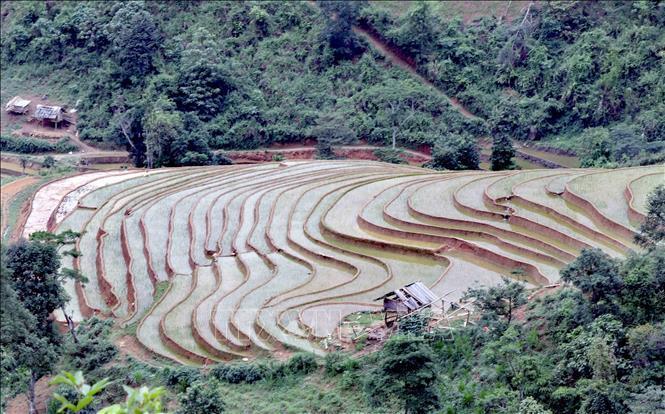 Ruộng bậc thang - bức tranh nghệ thuật nơi vùng núi Sơn La Ảnh 3