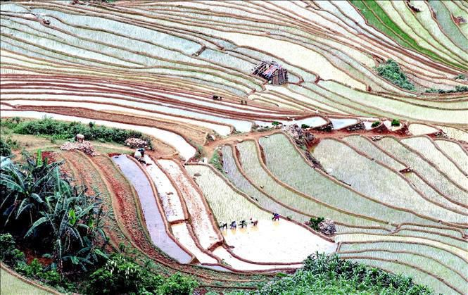 Ruộng bậc thang - bức tranh nghệ thuật nơi vùng núi Sơn La Ảnh 7