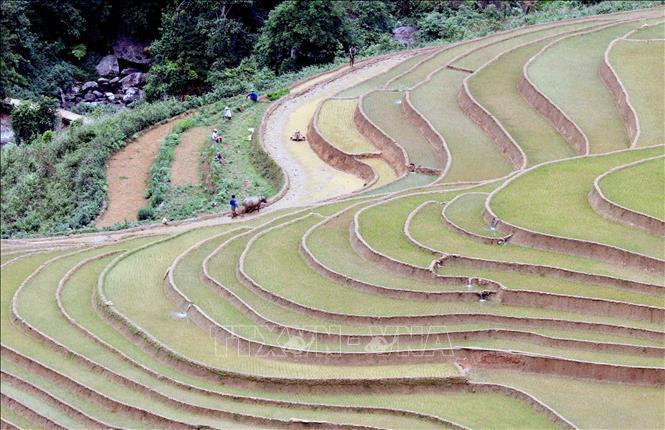 Ruộng bậc thang - bức tranh nghệ thuật nơi vùng núi Sơn La Ảnh 4
