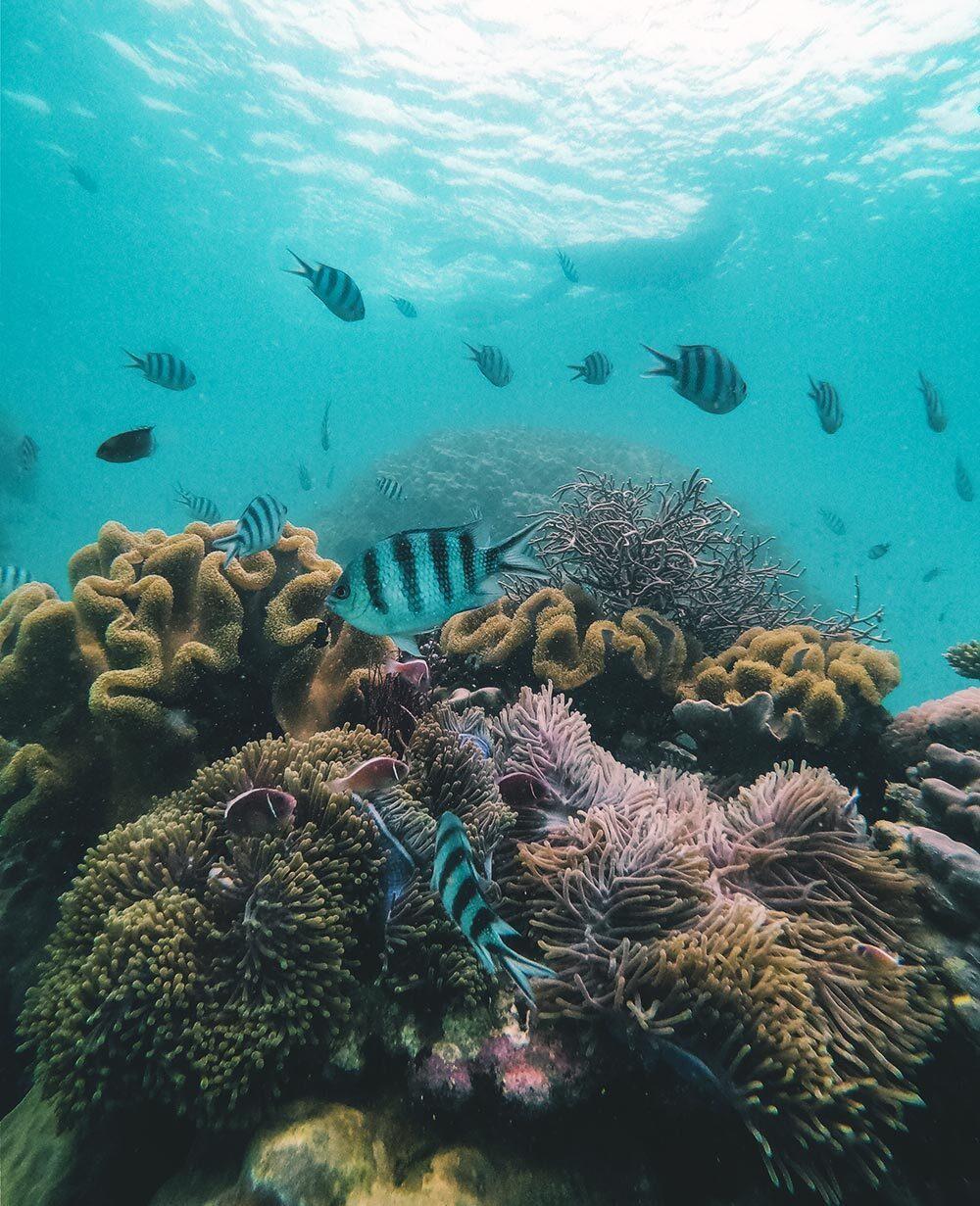 Trải nghiệm lặn biển ngắm san hô trên đảo ngọc Phú Quốc Ảnh 2