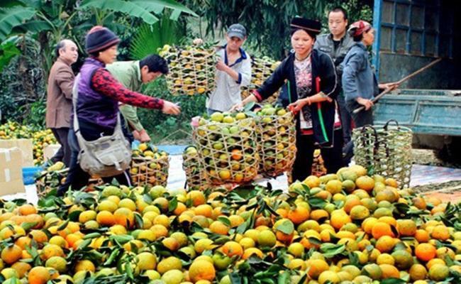 Tậu nhà lầu, xe hơi từ trồng cam, cả làng nhan nhản tỷ phú Ảnh 6