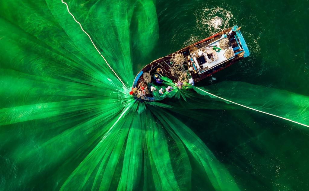 Hình đánh cá Việt Nam và loạt ảnh xanh mát thắng giải quốc tế Ảnh 1