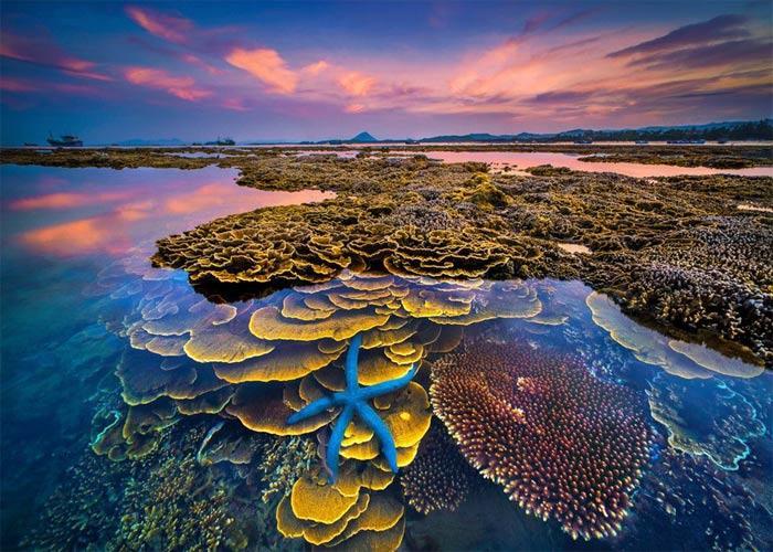 Không thể rời mắt trước vẻ đẹp lung linh của rạn san hô cạn Hòn Yến Ảnh 10