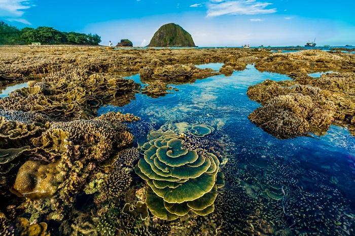 Không thể rời mắt trước vẻ đẹp lung linh của rạn san hô cạn Hòn Yến Ảnh 4