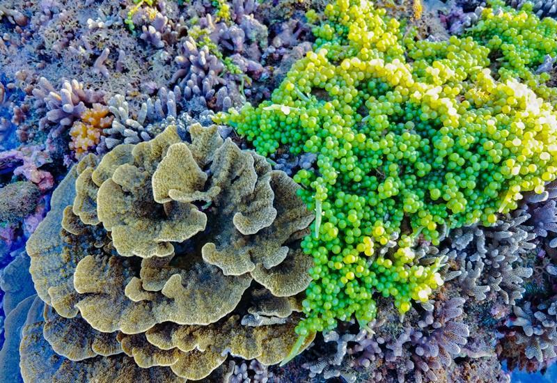 Không thể rời mắt trước vẻ đẹp lung linh của rạn san hô cạn Hòn Yến Ảnh 6