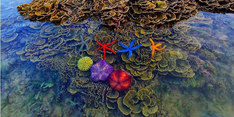 Không thể rời mắt trước vẻ đẹp lung linh của rạn san hô cạn Hòn Yến Ảnh 5