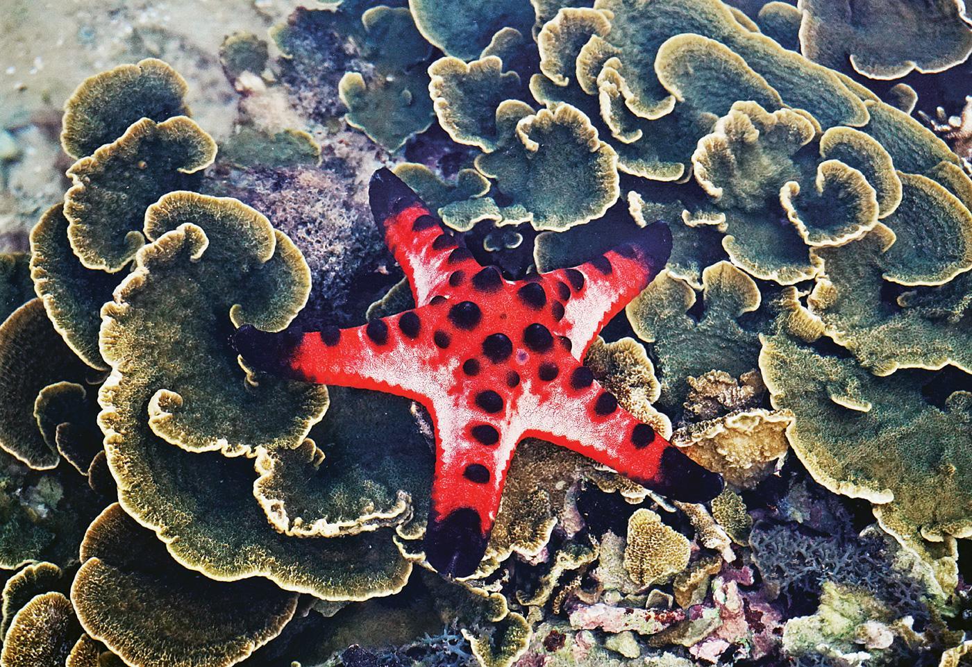 Không thể rời mắt trước vẻ đẹp lung linh của rạn san hô cạn Hòn Yến Ảnh 3