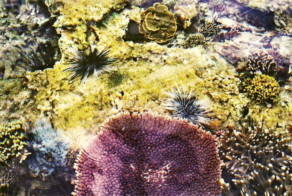 Không thể rời mắt trước vẻ đẹp lung linh của rạn san hô cạn Hòn Yến Ảnh 8